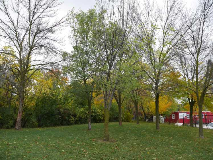 tree removal at Uniroyal Goodrich Park